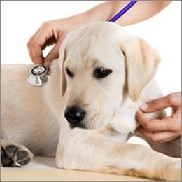 Animali da compagnia: arriva la tessera sanitaria individuale
