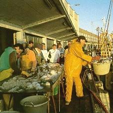 Pesca: gli ecosistemi marini rischiano il collasso
