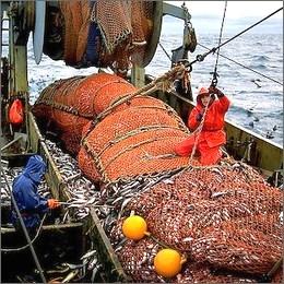 Pesca: regole pi� severe, la Commissione Europea