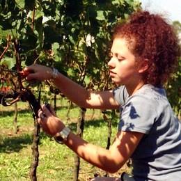 Agricoltura: Coldiretti,