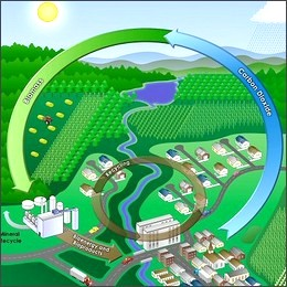 Biomasse, Italia tra le migliori per l'agroforestale, ma indietro sul recupero dei rifiuti.