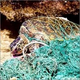 Plastica in mare: le aziende all'opera per ridurre i rifiuti