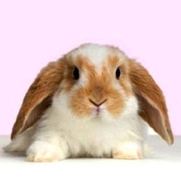 Piccoli animali: la sottocultura dell'acquisto facile