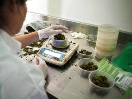 Dopo i farmaci orfani, quelli alla Cannabis: così l'Esercito produrrà cure a basso costo