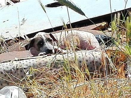 INTERVISTA - Incendi, degrado ambientale, 20 cani da salvare: il caso shock dell'ex Area Stacchini di Tivoli