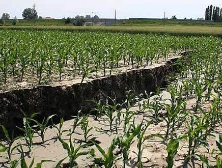 Effetto sisma, l'agricoltura è il settore più penalizzato nelle zone terremotate
