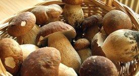Autunno 2014 anno d'oro per i funghi, canestri pieni con un mese d'anticipo
