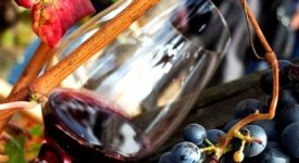 La vendemmia negli scavi si tinge di Rosso Pomepiano, così nasce il vino 'Villa dei Misteri'