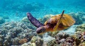 Ecosistemi marini: il riscaldamento globale modifica anche quelli tra loro scollegati