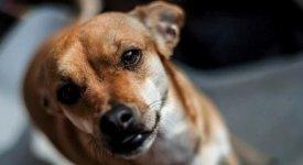 Cresce la voglia di coccole pet-friendly: 60 mln gli animali domestici nelle case degli italiani