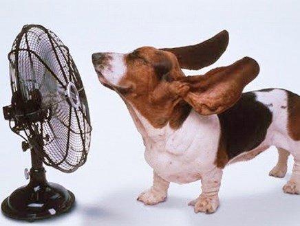 Amici a 4 zampe: AIDAA, come proteggerli da afa e temperature roventi in 10 mosse
