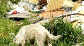 Cuccioli di Stacchini: via del Sindaco di Tivoli  alle catture e al trasferimento in canile