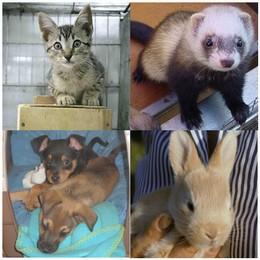 Animali domestici: regole e consigli per una vacanza a 4 zampe
