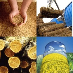 Biocarburanti: a che punto siamo?