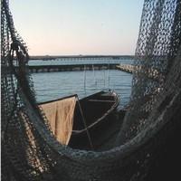 Pescaturismo: versione