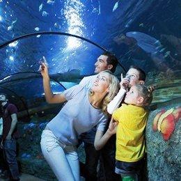 In progetto nella Città Eterna un acquario da 15 mln di euro