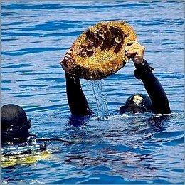 Archeologia subacquea: al vaglio la Soprintendenza del mare
