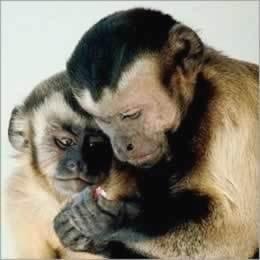 Dalle scimmie un antidoto all'ansia