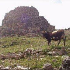 Nuraghi: un problema per pastori e agricoltori