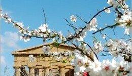 La Valle dei Templi è...in fiore!