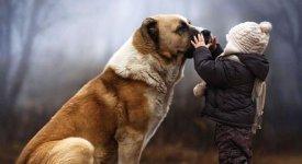 Anche i cani provano empatia, lo studio scientifico arriva dall'Università di Pisa. Ecco cosa accade