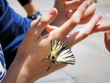 Da crisalidi a farfalle: l'arte e la natura di Teresa&Rossana Coratella per l'Ambiente