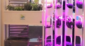 Agricoltura sostenibile 4.0: l'Istituto Alberghiero Pantaleoni apre le porte all'Acquaponica